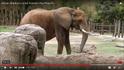 Cameron Park Zoo Elephant