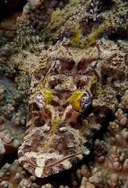 Beafout's Crocodile Fish