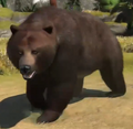 Grizzly-bear-zootycoon3