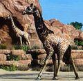 Reticulated Giraffe ZTX