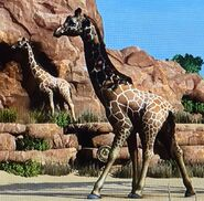 Reticulated Giraffe ZTX