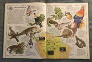 The Animal Atlas (9)