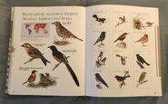 Visual Dictionary of Animals (96)