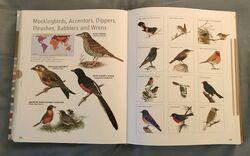 Visual Dictionary of Animals (96).jpeg