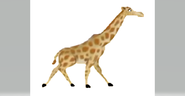 Animal Zoo Puzzle Giraffe
