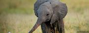 Elephantsnifffing