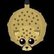 Mopeio Cheetah