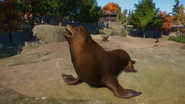 Planet Zoo Sea Lion