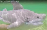 SML Shark
