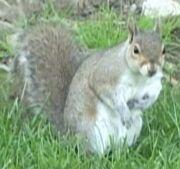 Squirrel outside.jpg
