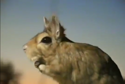 Zoboomafoo Springhare.png