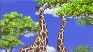 JEL Giraffes