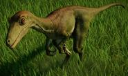 JWE Troodon