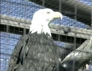 LPZ Eagle