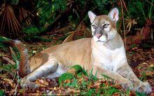PantherPoster.jpg