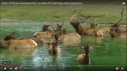 Six Flags Elks