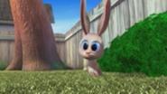 TW Rabbit