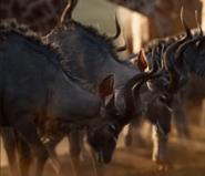 The Lion King 2019 Kudus
