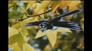 Willie Wagtail (Dot and the Kangaroo).png