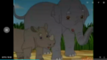 Asian Elephant and Sumatran Rhino