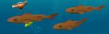 Lesser dogfish