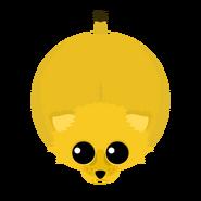 Mopeio Lioness