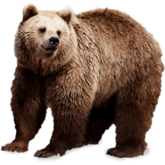NatureRules1 Grizzly Bear