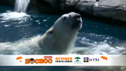 Pittsburgh Zoo Polar Bear (V2)