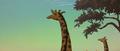 TWT Giraffes