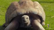 The Zoo Tortoise