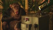 Bosch Chimpanzee