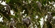 MMHM Parrots