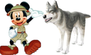 Mickey meets grey wolf