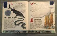 Ocean Life Dictionary (2)