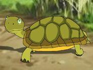 Rileys Adventures Leopard Tortoise
