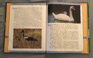 Scholastic Encyclopedia Of Animals (52)