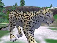 Zt2-snowleopard