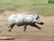 AFO Warthog