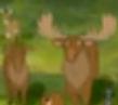 AMC Theaters Moose