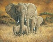 African Elephant Painting
