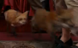 Evan Almighty Foxes