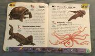 Extreme Animals Dictionary (15)