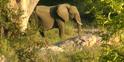 KNP Elephant2
