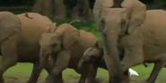 MMHM Forest Elephants