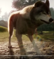 Planet Zoo Wolf