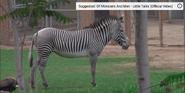 Reid Park Zoo Zebra