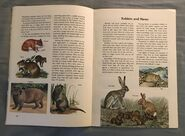 A Golden Exploring Earth Book of Animals (9)