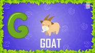 Baby Time Goat