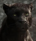 Bagheera in The Jungle Book (2016)