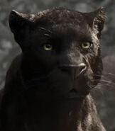 Bagheera in The Jungle Book (2016)